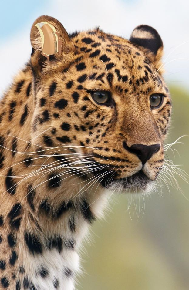 Name:  leopard-head.jpg Views: 19 Size:  97.8 KB